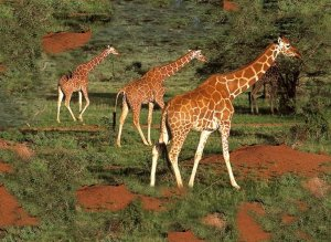 giraffe in african safari