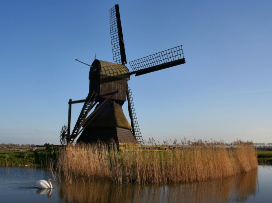 windmill in traditional looks in Holland
